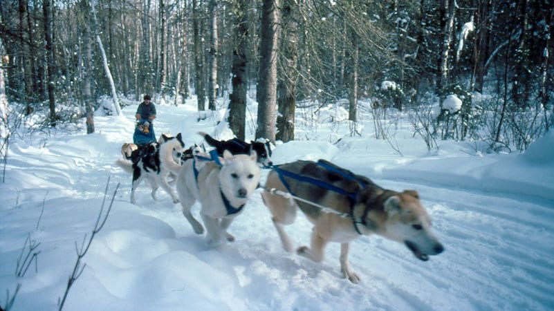 Gunflint Lodge Dog Sledders