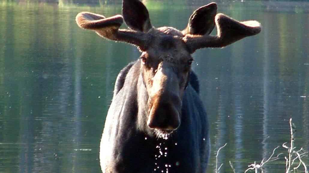Gunflint Lodge  Wild Animal Sightings