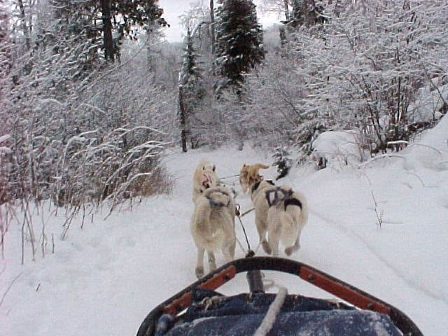 Gunflint Lodge President weekend dogsledride2